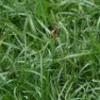 A erva daninha da fofoca